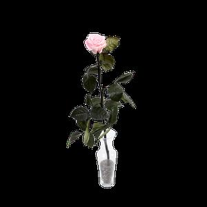 Rosa Preservada Rosada En Florero