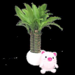 Bambu Limon + Pinky Chanchita
