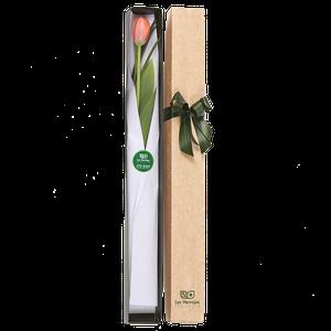 Caja Tulipanes X 1