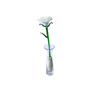 Rosa Vitro blanca