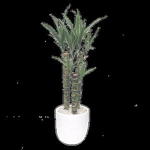 Bambu Plateado