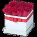 Tiffany x16 Rojo
