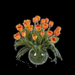Pecera Tulipanes