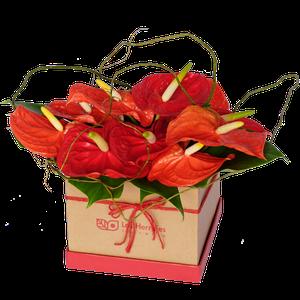 Tiffany Red Box Anthurios