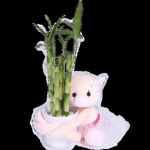 Chanchita Bambu