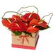 Tiffany  Box Anthurios