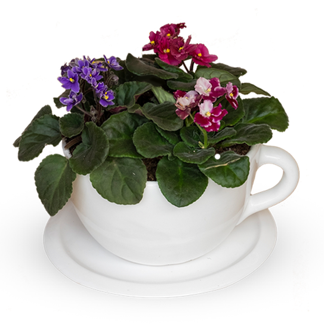 Tea time violetas